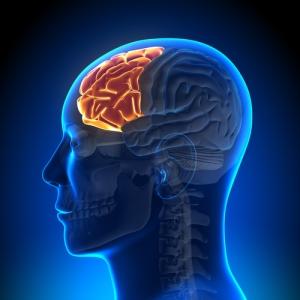 Frontal lobes and hegemonikon